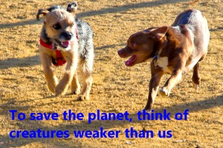 19 To save the planet, think of creatures weaker than us