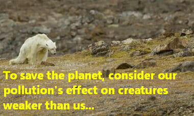 To save the planet, consider our pollution's effect on creatures weaker than us